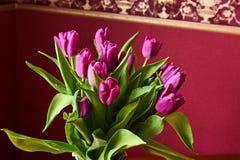 Eine lila Tulpenknospe Macrophoto Lizenzfreies Stockfoto
