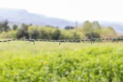 Eine Linie grauer Stacheldraht mit drei Knoten gegen einen Hintergrund des gr?nen Grases und der B?ume stockbilder