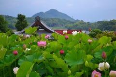 Eine Lotosblume Stockbild