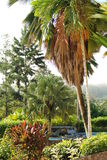 Eine Luxuxrücksortierung in einem tropischen Regenwald Lizenzfreie Stockbilder