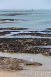 Eine Möve steht auf einem Strand still (Frankreich) Stockbild