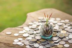Eine Münze in einer Glasflasche mit einem kleinen Baum auf Spitze und eine Münze bes Stockbild