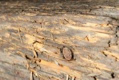 Eine Makrophotographie des Holzes mit Nagel Stockfotografie