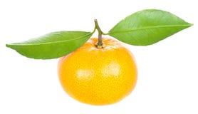 Eine Mandarine mit grünen Blättern Stockfotografie