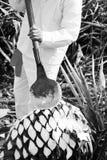 Eine Mannarbeit in der Tequilaindustrie stockfotos