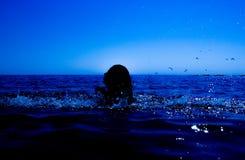 Eine Meerjungfrau taucht vom Meer u. vom x28 auf; 18& x29; Lizenzfreies Stockfoto