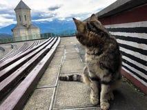 Eine mehrfarbige kleine Katze sitzt auf einem Sockel gegen Hintergrund einer Kapelle, der Kirche des hellen blauen gesättigten Hi stockfotografie