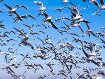 Eine Menge der Seemöwen Lizenzfreies Stockfoto