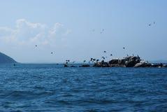 Eine Menge von den Kormoranen, die von einer kleinen Insel sich entfernen Phalacrocorax Japan von Meer Stockfotos