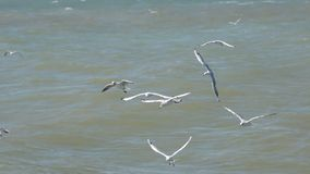 Eine Menge von den Möven, die niedrig über die Wellen fliegen und Brot essen stock video footage