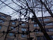 Eine Menge von den Tauben, die auf einem Baum im Winter sitzen Stockbild