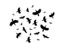 Eine Menge von den Vögeln, die in einen Kreis auf einem weißen Hintergrund fliegen Stockfotografie