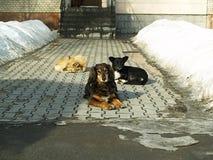 Eine Menge von Hunden Stockfotos
