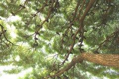 Eine Menge von Vögeln auf den Niederlassungen eines Baums im botanischen Garten Stockfotografie
