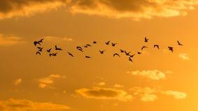 Eine Menge von Vögeln an der Dämmerung, die Sonne Stockfotos