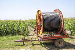 Eine Mittelgelenksprinkleranlage, die ein Kornfeld im F.E. wässert Stockfoto
