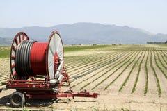Eine Mittelgelenksprinkleranlage, die ein Kornfeld im F.E. wässert Lizenzfreies Stockbild
