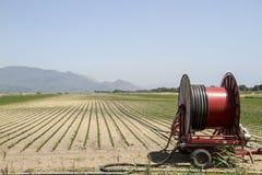 Eine Mittelgelenksprinkleranlage, die ein Kornfeld im F.E. wässert Lizenzfreies Stockfoto