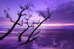 Eine Morgenlandschaft Stockfotografie