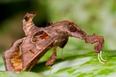 Eine Motte in der Tarnung Lizenzfreies Stockfoto