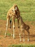 Eine Mutterliebe. lizenzfreie stockbilder