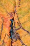 Eine Nahaufnahme der Adern auf einem Herbstblatt Stockbilder