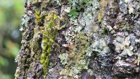 Eine Nahaufnahme der grünen Heuschrecke im Regenwald Lizenzfreie Stockfotografie