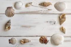 Eine Nahaufnahme einer Ansammlung Seashells lizenzfreie stockbilder