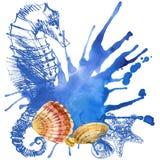 Eine Nahaufnahme einer Ansammlung Seashells stock abbildung
