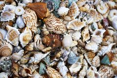Eine Nahaufnahme einer Ansammlung Seashells Stockbild