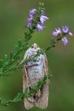 Eine Nahaufnahme einer Motte, mit Fokus auf Augen Lizenzfreie Stockbilder