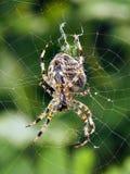 Eine Nahaufnahme einer Spinne, die sein Netz spinnt Lizenzfreie Stockfotografie