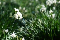 Eine Nahaufnahme einer weißen Blume lizenzfreie stockfotos