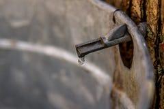 Ahornsirup, Tropfenfänger durch Tropfen. Stockbild