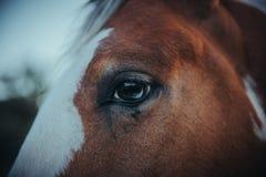 Eine Nahaufnahme eines Pferdeauges Stockbilder