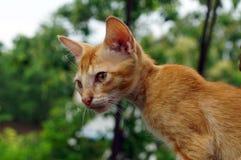 Eine Nahaufnahme von Kätzchen lizenzfreie stockfotografie
