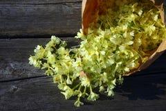 Eine nahe Ansicht über ausgewählte gelbe Blumen Lizenzfreies Stockfoto