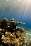 Eine natürliche Leuchte schoss von einem Korallenriff Lizenzfreie Stockfotografie