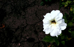 Eine natürliche weiße Blume Stockbild