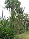 eine Natur in Asien Stockbilder