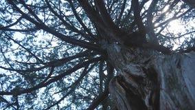 Eine nebelhafte Dämmerung gesehene durch Baumaste Blattlose Baumaste der Wintersaison, würzen spezifisches Bild der Natur stock video footage