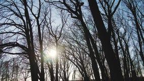Eine nebelhafte Dämmerung gesehene durch Baumaste Blattlose Baumaste der Wintersaison, würzen spezifisches Bild der Natur stock footage