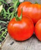 Eine nette fleischige Tomate Stockfotos