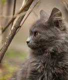 Eine nette graue Katze, die im Yard spielt lizenzfreie stockfotos