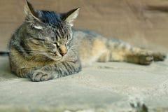 Eine nette Katze des Tigers Stockfotografie