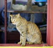 Eine nette Katze, die am l?ndlichen Haus sich entspannt stockbilder