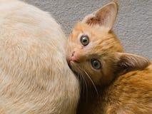 Eine nette Katze, welche die Kamera betrachtet Stockbilder