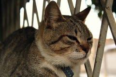 Eine nette kleine Katze, Liebeskatze, Abschluss oben Stockbilder