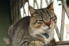Eine nette kleine Katze, Liebeskatze, Abschluss oben lizenzfreie stockbilder