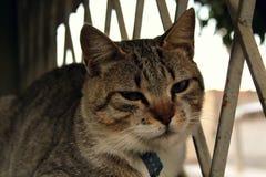 Eine nette kleine Katze, Liebeskatze, Abschluss oben Lizenzfreie Stockfotos